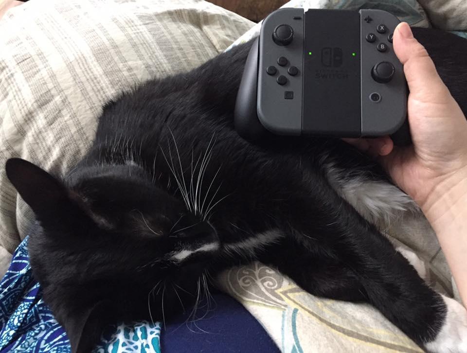 kittycontroller